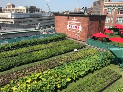 Yes, even the Red Sox have a rooftop garden.